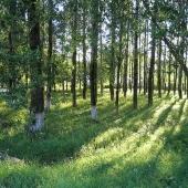 В ЮЗАО может появиться «Эко-парк будущего»