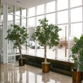 На первом этаже растения при выходе растут