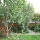 На участке: газон, плодовые деревья, ландшафтный дизайн