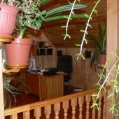 Везде растения и рабочее место