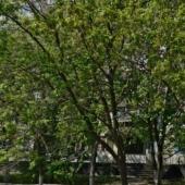 Летняя фотография дома № 18 по ул. М. Голованова, Марьино. В этом доме можно снять однокомнатную квартиру.