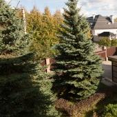 Ландшафтный дизайн при доме во дворе и часть навеса гаража