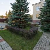 Вековые деревья во дворе дома