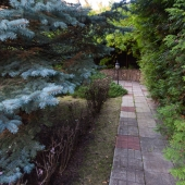 Снова вековые деревья на этом участке
