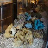 Внутри кораллы и раковины