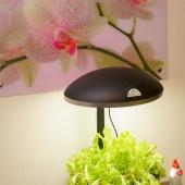 Потрясающей красоты лампа на кухне - тоже на заказ!