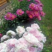 Еще фото цветов у дома в д. Сальково