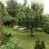 Деревья этим летом