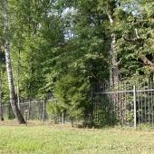 По периметру КП Боровики растёт буйная растительность