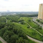 Дорожки, лесопарковая зона - хорошая экология