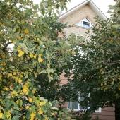 Достаточно взрослые деревья на участке в Зеленой Горке