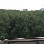 Это вид с балкона на часть Битцевского леса