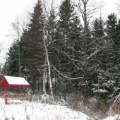 Там очень красивые природные лесные места