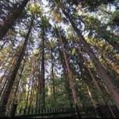 Шикарный лес на Давыдковской 3