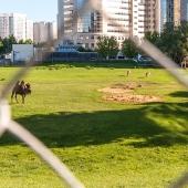 По соседству есть свой мини-зоопарк